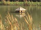 Morley Manor Lake
